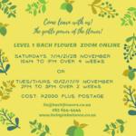 Level 1 Online courses (Zoom)
